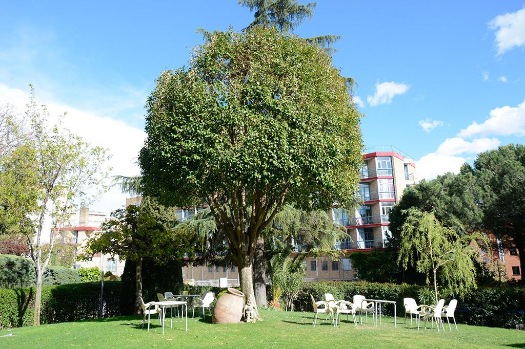 Jardines Colegio Mayor Mendel